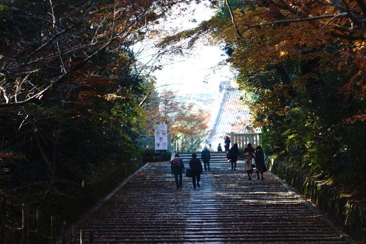 Jupiter9 Vintage Lens Kyoto The Way Forward Togetherness Outdoors Real People Autumn Walking Tree 光明寺 Japan Temple EyeEm Best Shots