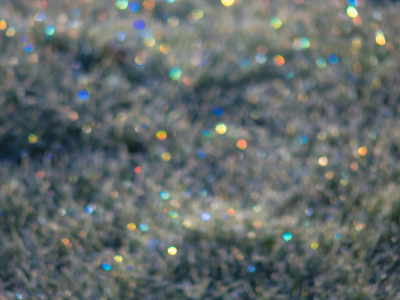 Backgrounds Bokeh Bokeh Photography Close Up Close-up Colors Detail Fairy Lights Frost Frosty Mornings Glimmer Glistening Ice Ice Crystals Plant Plant Life Winter Winter Wonderland