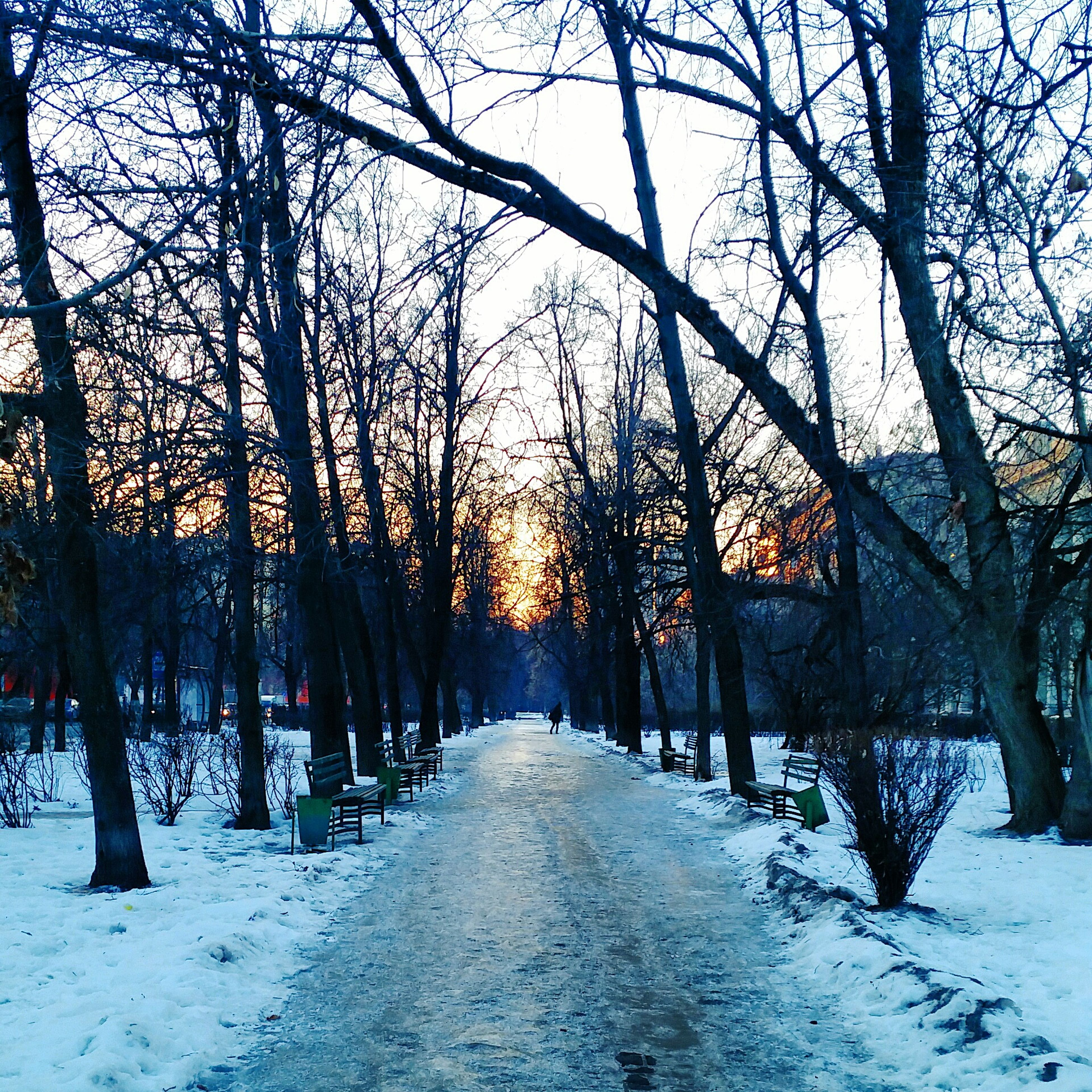 snow, winter, cold temperature, season, tree, the way forward, bare tree, diminishing perspective, treelined, covering, weather, nature, vanishing point, tranquility, tree trunk, sunset, beauty in nature, branch, tranquil scene, road