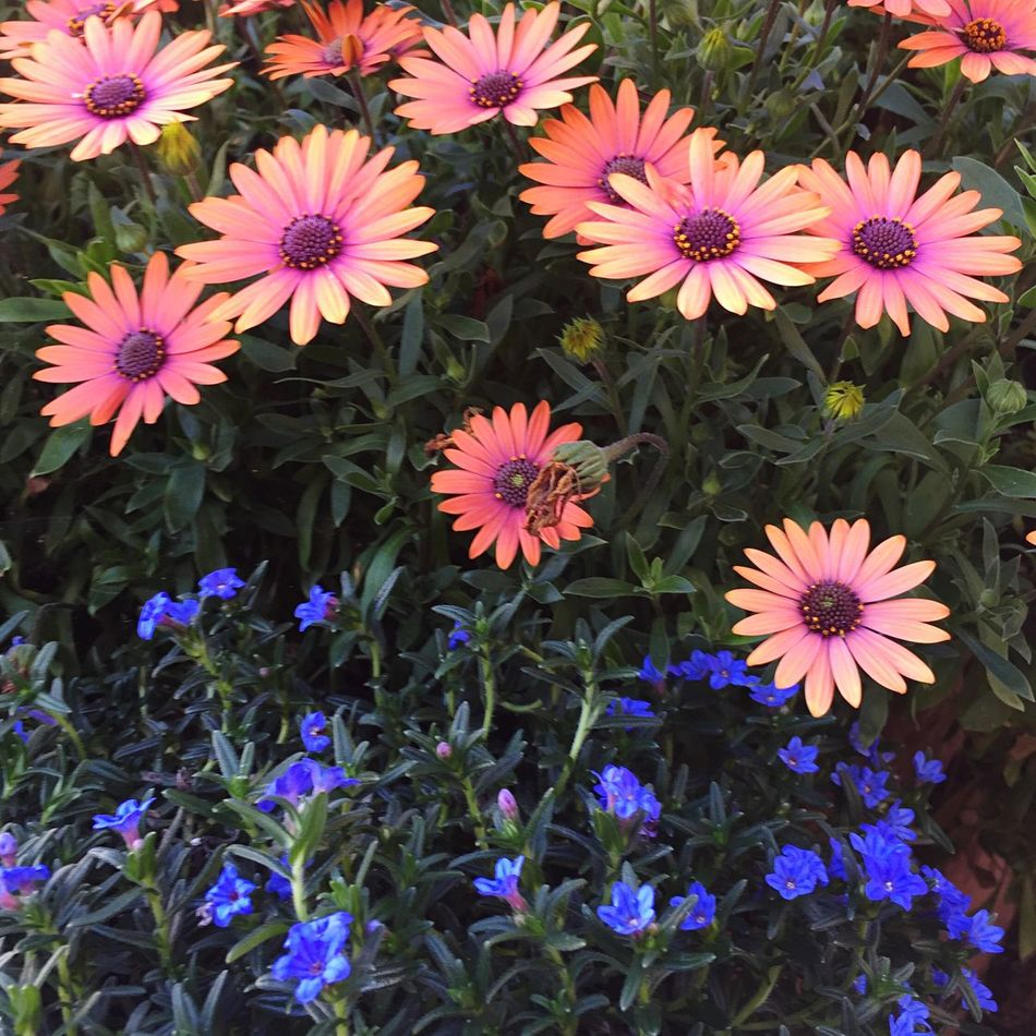 Winter Blooms Flowers The Castro Open Edit Blue And Orange Complementary Colors
