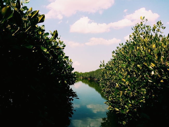 Blue vitamin Mangrove Tour Traveling Travelling Photography Traveller INDONESIA Semarang , Indonesia
