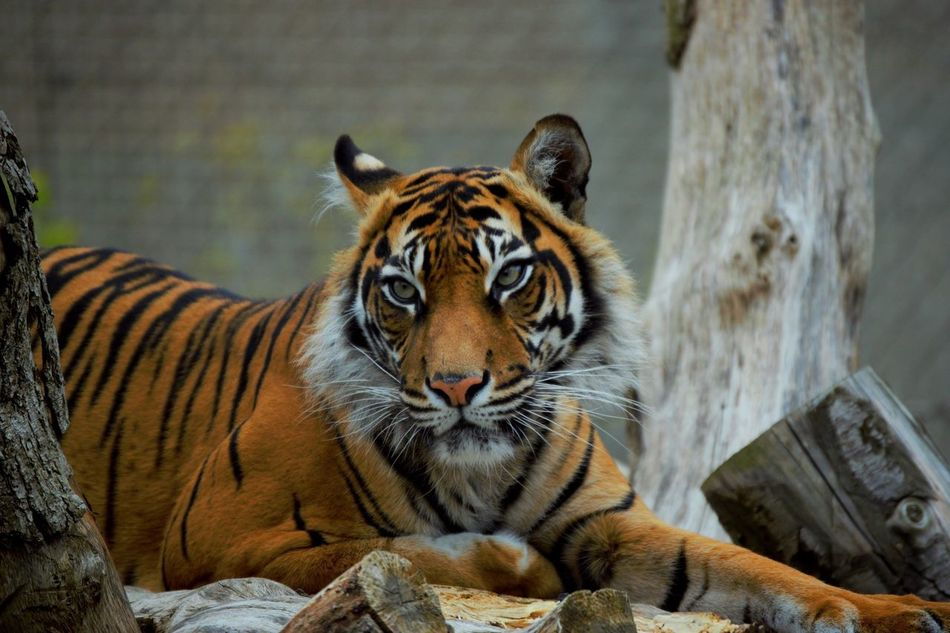 Beautiful stock photos of kunst, Animal Markings, Animal Themes, Animal Wildlife, Animals In Captivity