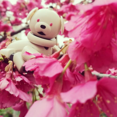 AIBO Aibobox Sonyaibo Toy Dog Robot Sony Japan Pink Color Nature Close-up No People Outdoors Day Sunny Day Happiness Cherry Blossoms Sakura Nature Flower Pink Millennial Pink