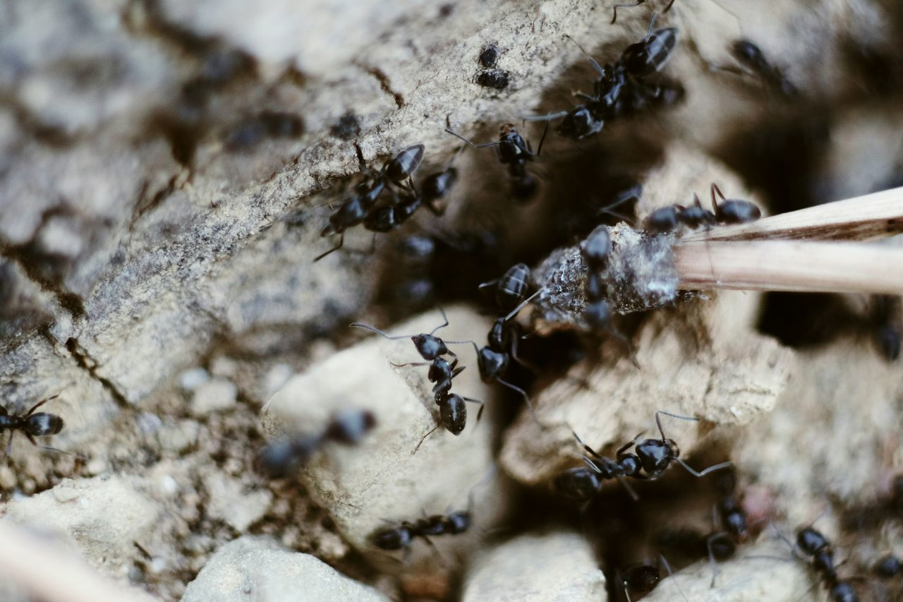 Close-up No People High Angle View Nature Ant Outdoors Animals In The Wild Animal Themes Insect Day Colony Branch Tree Spider Ants Pine Tree