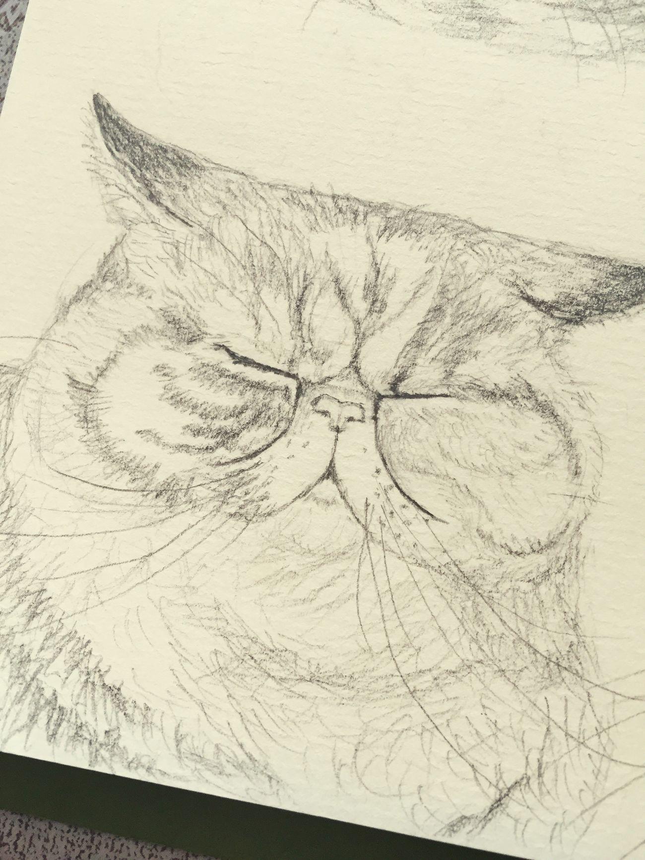 Cat Art, Drawing, Creativity Drawing Artistic