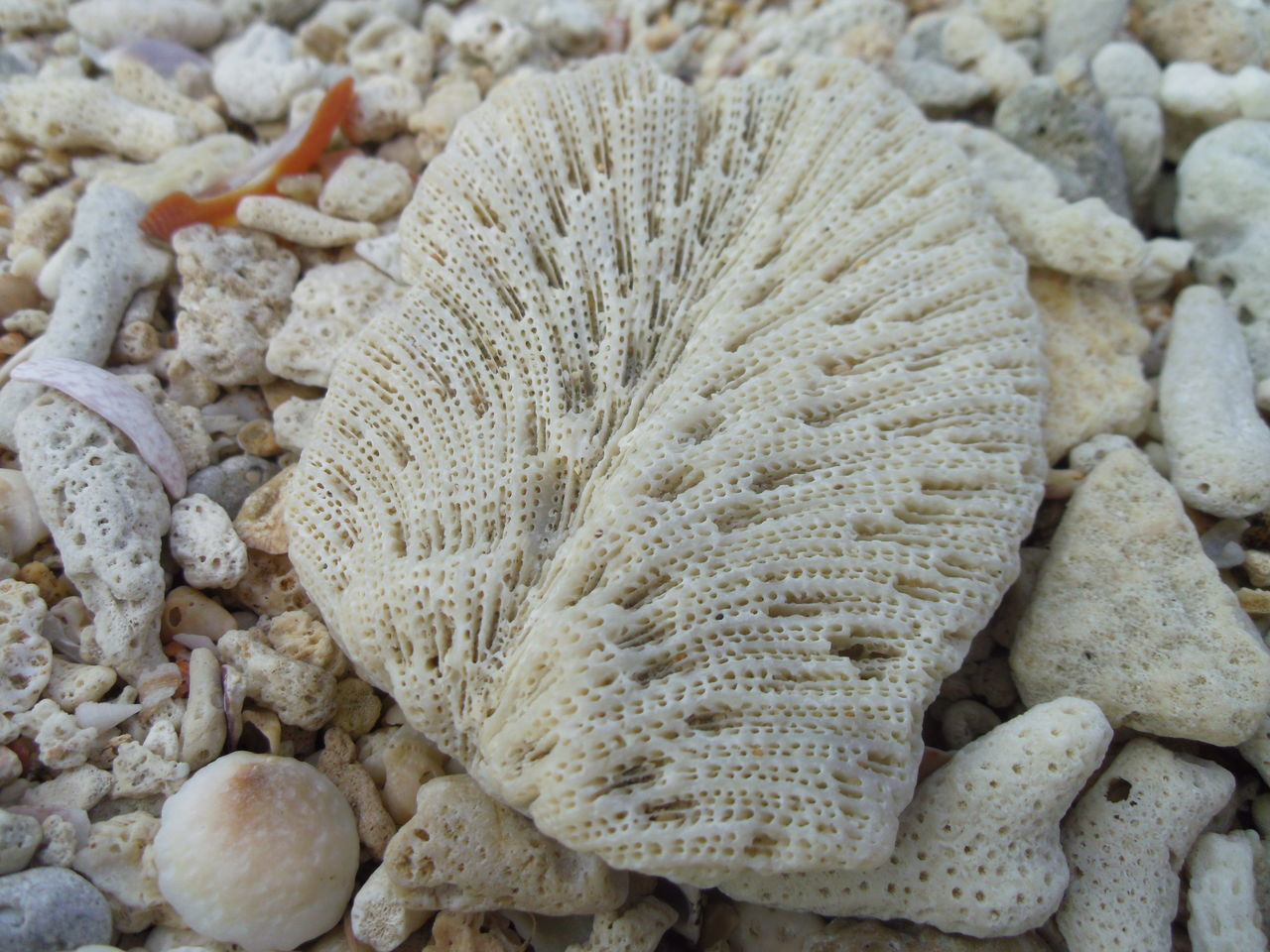 Beach Gastropoda