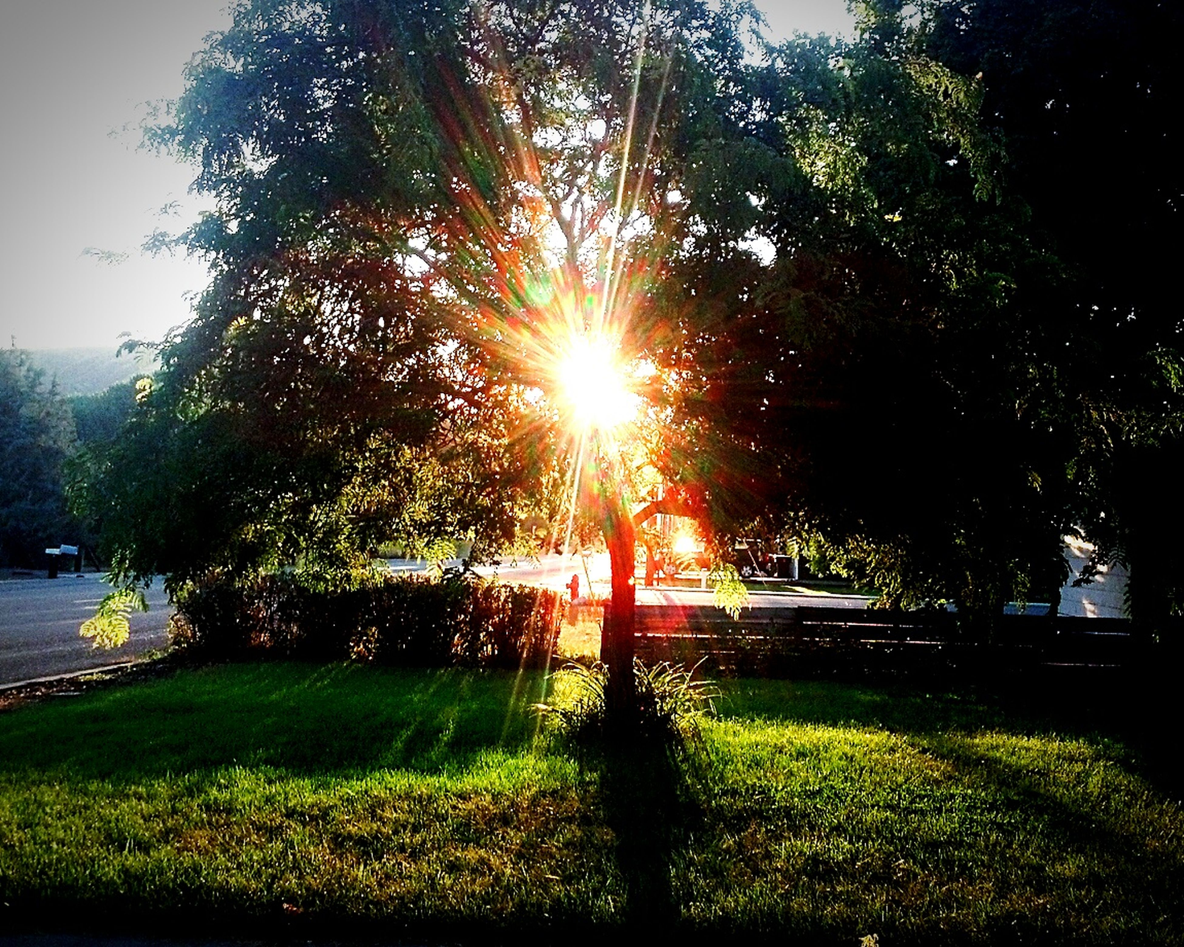 tree, sun, sunlight, growth, sunbeam, grass, lens flare, tranquility, park - man made space, nature, plant, green color, beauty in nature, tranquil scene, branch, no people, sunny, clear sky, scenics, outdoors