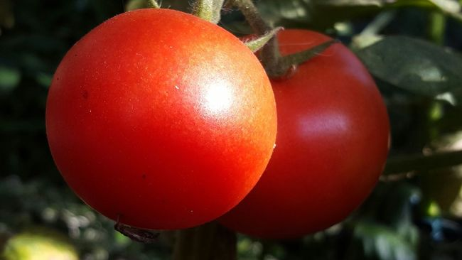 Tomato Red Close-up Healthy Eating Food Red Color Agriculture Tomate Tomato Plant Vegetable Vegetables Gemüse Gesund Gesundessen Gesunde Ernährung Vegetarian Food Vegan Veganfood Vegan Food Vegitarisch Zwei Two Vitamins Vitamine