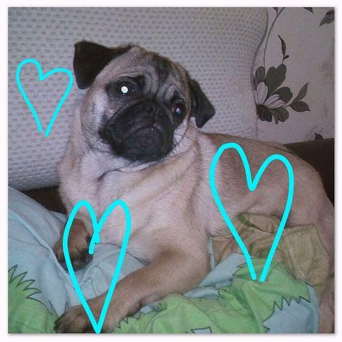 My Little Dog  My Little Lover Dog Love Animal Themes Home Enjoy ✌
