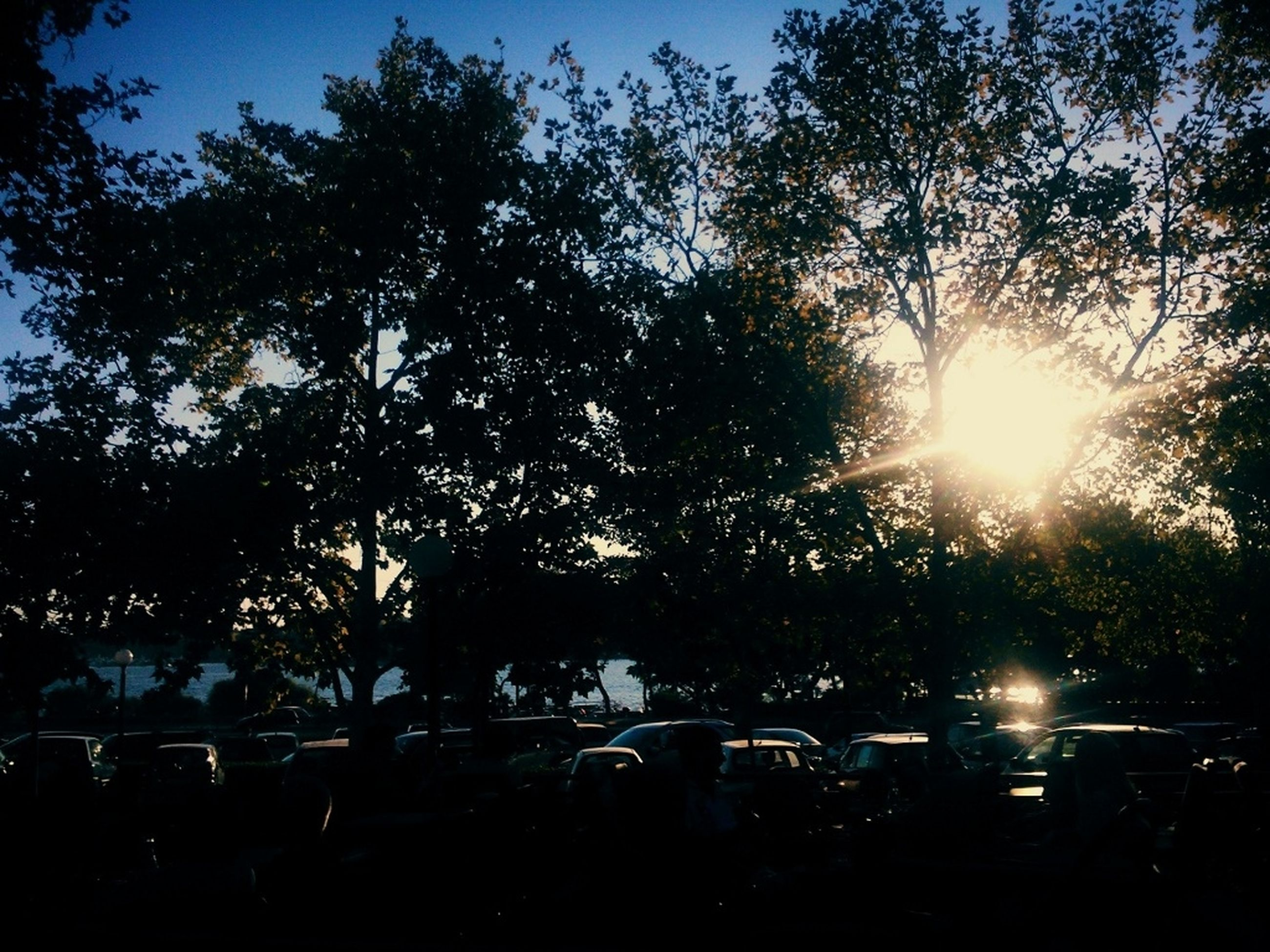 tree, silhouette, sunlight, transportation, growth, land vehicle, mode of transport, sky, nature, car, clear sky, outdoors, day, no people, lens flare, sun, park - man made space, sunbeam, tranquility, beauty in nature