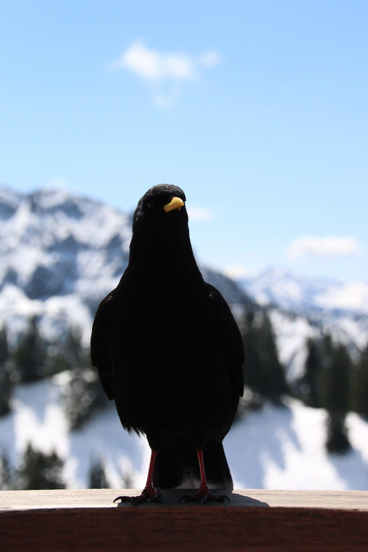 Beautiful stock photos of black, Animal Themes, Beak, Bird, Black
