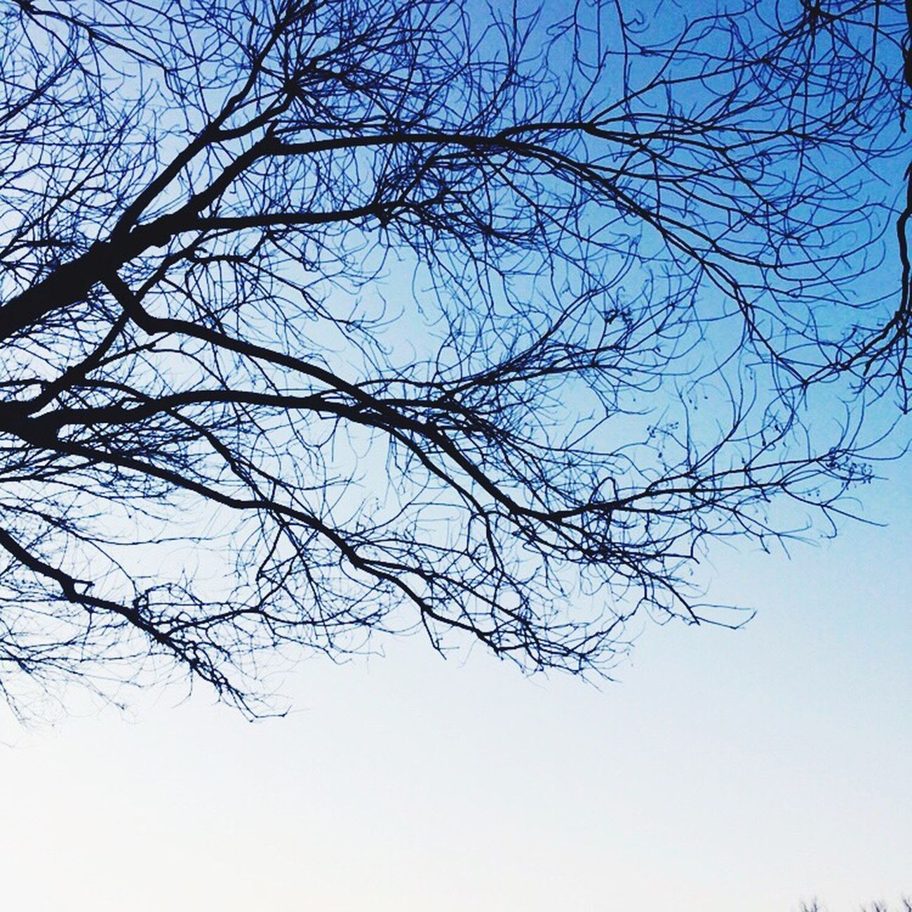 Check This Out Bare Tree Low Angle View Branch Nature Clear Sky Outdoors Getting Inspired Branches Nature
