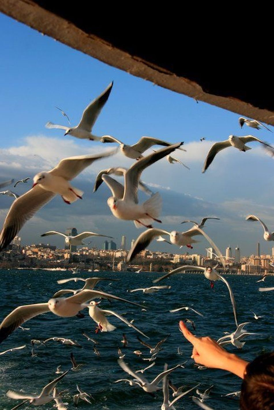 Seagull 💙🎈 Istanbul Istanbuldayasam Hello World Hi! Taking Photos Happiness Blue Sky Relaxing Turkey