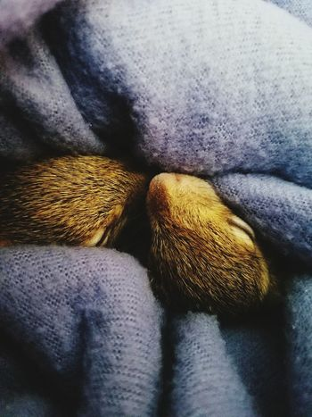 Sleepy heads Baby Squirrels Rehabilitating Foster Babies My Furbabies Animal Photography Urban Life Tree Babies Fell From Heaven Softness Animals Pets Snuggled In Brothers Remy and Rory
