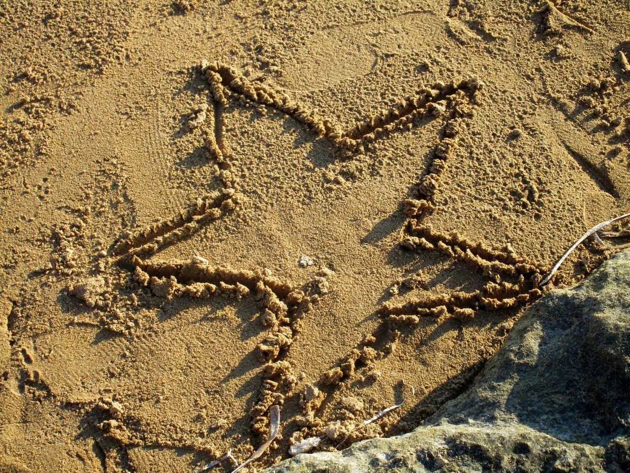 Beach Sand Sand Star Sea Sea Sand Showcase March Showcase: March Star Winter 43 Golden Moments