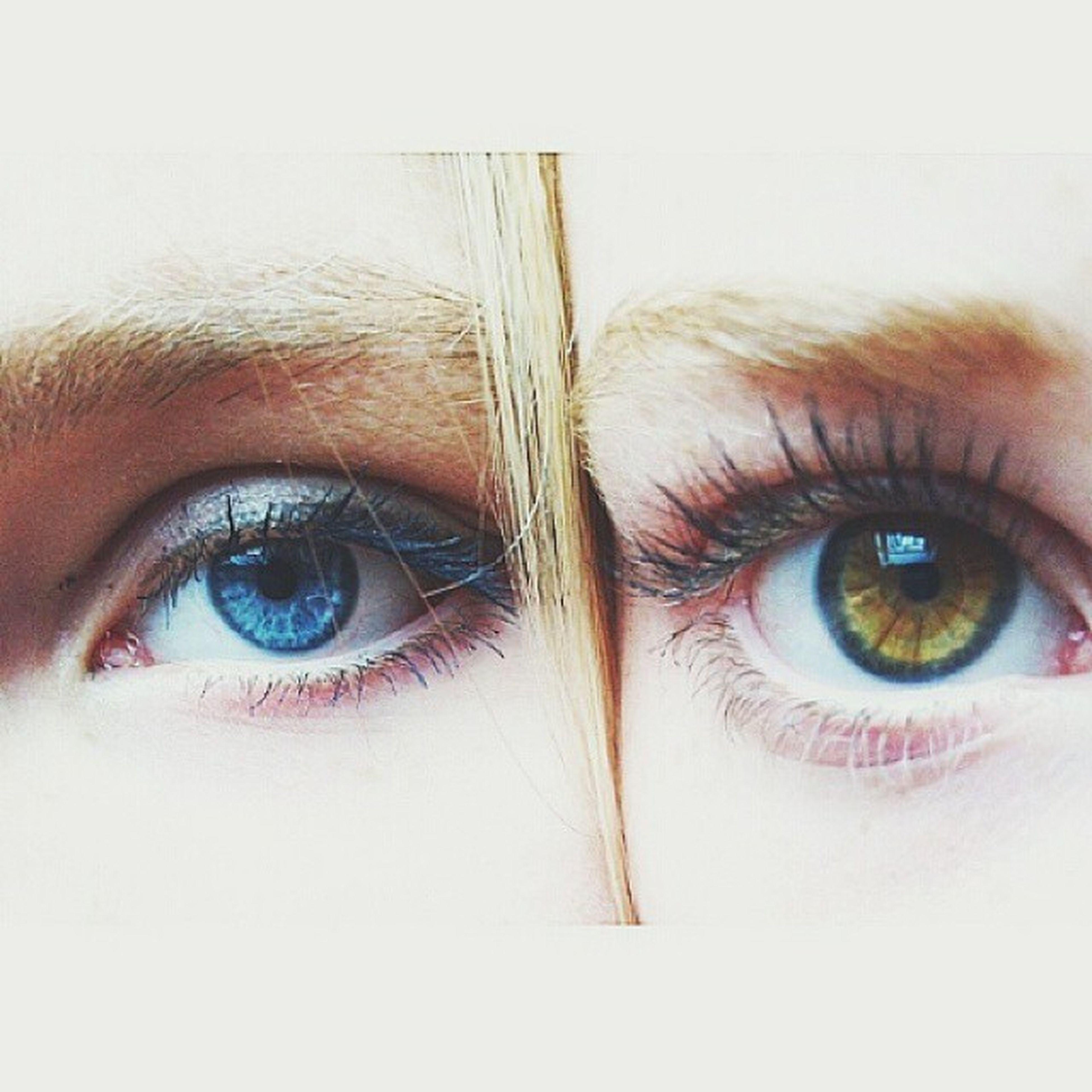 human eye, looking at camera, portrait, close-up, eyelash, headshot, human face, eyesight, lifestyles, indoors, part of, sensory perception, eyebrow, person, young adult, front view, blue eyes