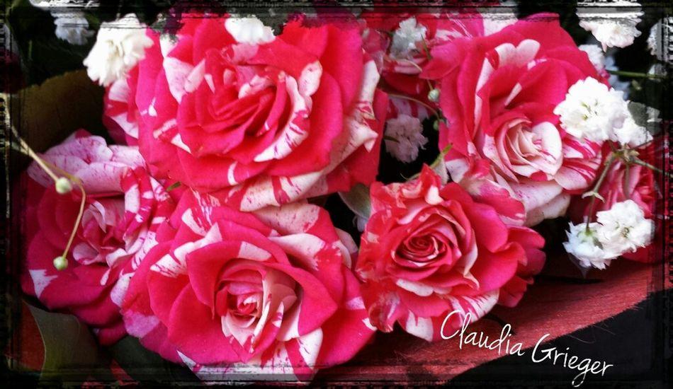 Fowlers Toad Heartflowers Flower Art Popular Photos flower Münster BloomingGreat MyFavRoses flowerforyou awasome Populär