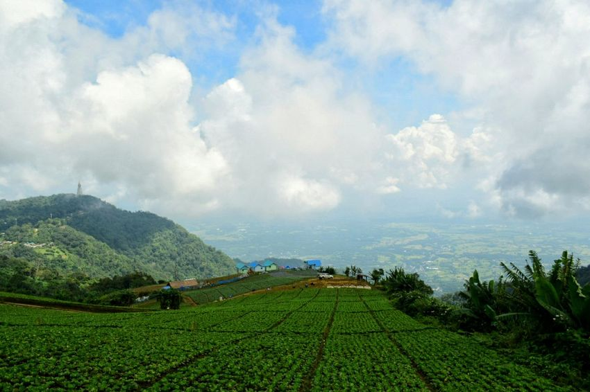 Agriculture Plant Field Valley Environmental Conservation Landscape Farm Land Hill Social Issues Cloud - Sky Nature Cultivated Land Rural Scene Tourism Growth