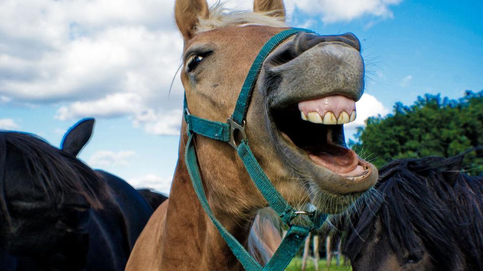 Beautiful stock photos of horse, Animal Themes, Bridle, Close-Up, Cloud - Sky