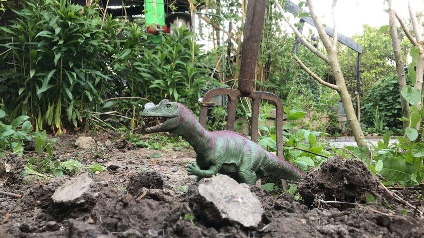 On guard Extinct Dinosaur Tree Animal Wildlife Nature Plant Day Outdoors Growth