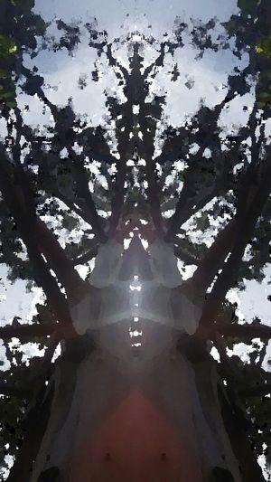 Nature Mirrored Tree Photography