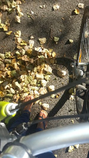 Falling Leaves A Bird's Eye View Bike Life Light And Shadow Bike It's Still Summer Sun Light Feet On The Ground Feetselfie Pivotal Ideas Autumn Leaves Autumn Is Coming My Favorite Place Adapted To The City The City Light