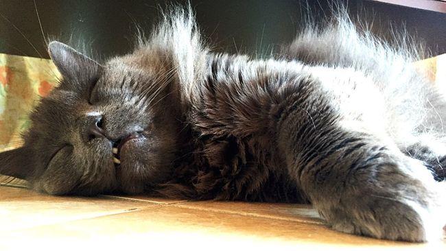 Zufolo Felino Gatto Gatto😸 Cat♡ Cats Cat Lovers Cat Felinos Zampette
