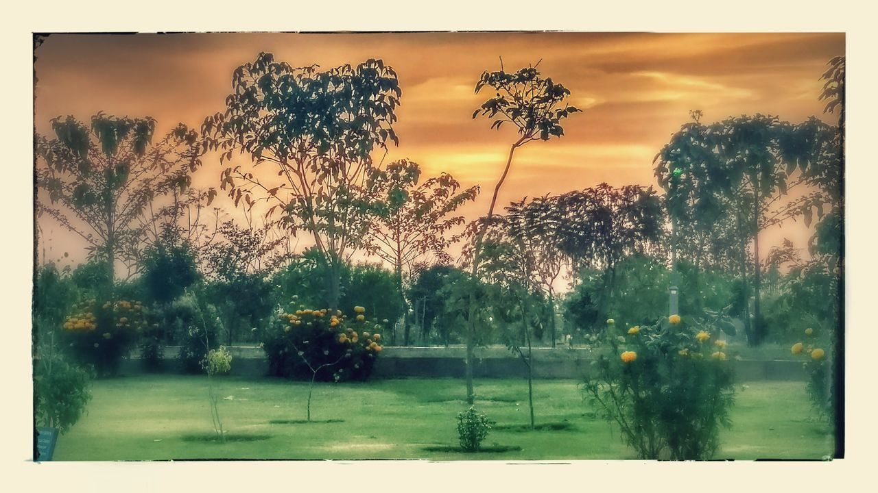 Tree Sunset Sky Nature Water Sun Outdoors Day Scenics Getting Inspired Beauty In Nature Smoke - Physical Structure Cloud - Sky Tranquil Scene Infosys Moto G5 Plus Edited Investing In Quality Of Life The Week On EyeEm EyeEmNewHere Lost In The Landscape