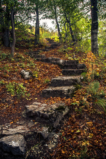 Autumn Beauty In Nature Branch Bükk National Park Day Forest Hungary Leaf Mystic Nature No People Outdoors Scenics Stone Stairs Thick Trail Tranquil Scene Tranquility Tree Tree Trunk Way Up In The Mountains WoodLand
