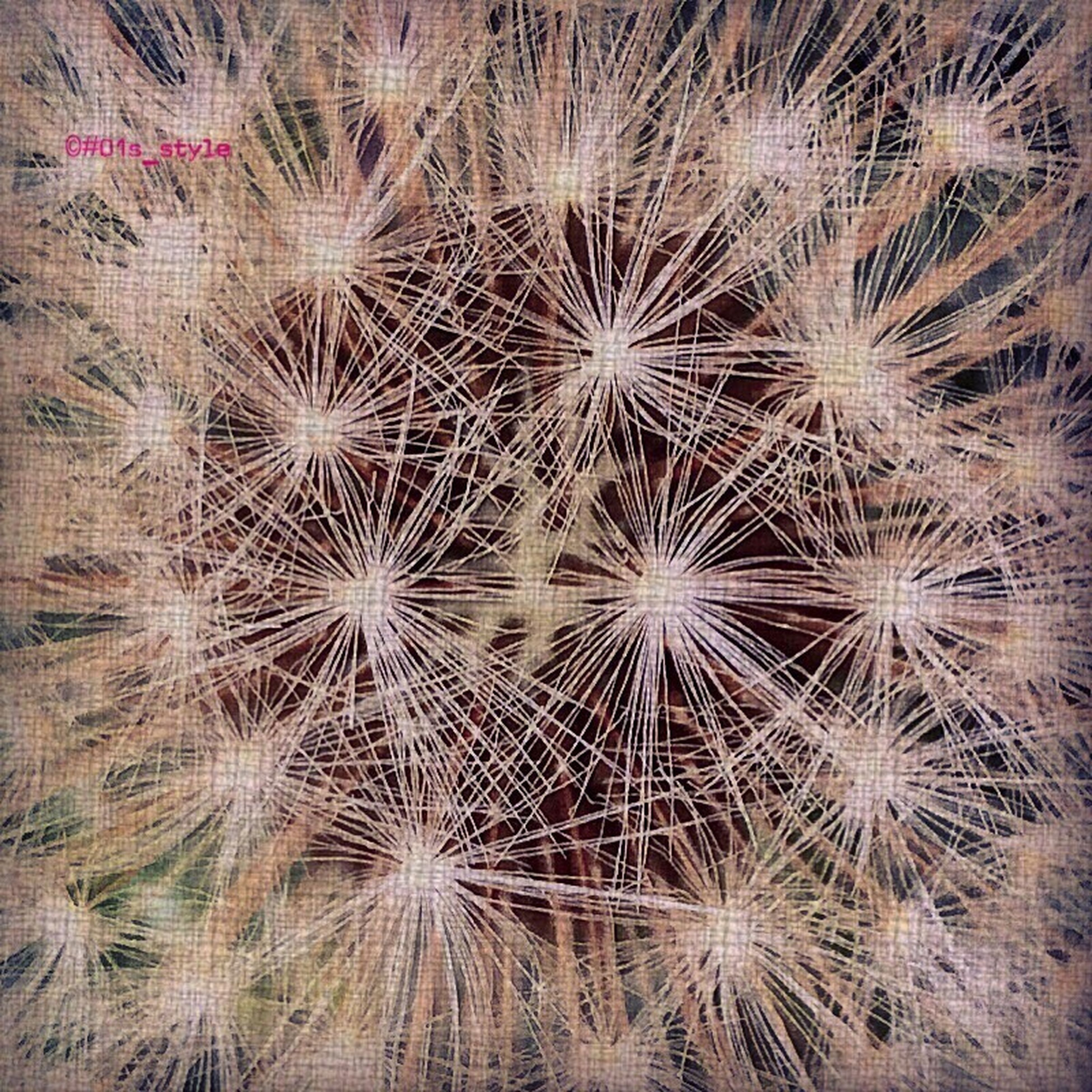 full frame, backgrounds, natural pattern, close-up, freshness, growth, nature, textured, beauty in nature, fragility, flower, pattern, no people, abundance, detail, high angle view, flower head, dandelion, macro, extreme close-up
