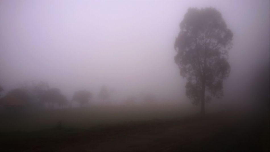 Countryside Fog Fog And Trees Foggy Day Neblina Pedra Bela Silent Hill Tree