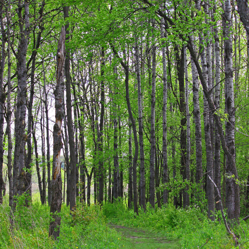 Hiking destinations Adventure Beauty In Nature Bright Green Deep Woods Destination Directions Entrance Fresh Growth Hiking Landscape Lush Foliage MidWest Nature Outdoors Path Path In Forest Pathway Scenics Season  Serene Spring Travel Tree Wisconsin