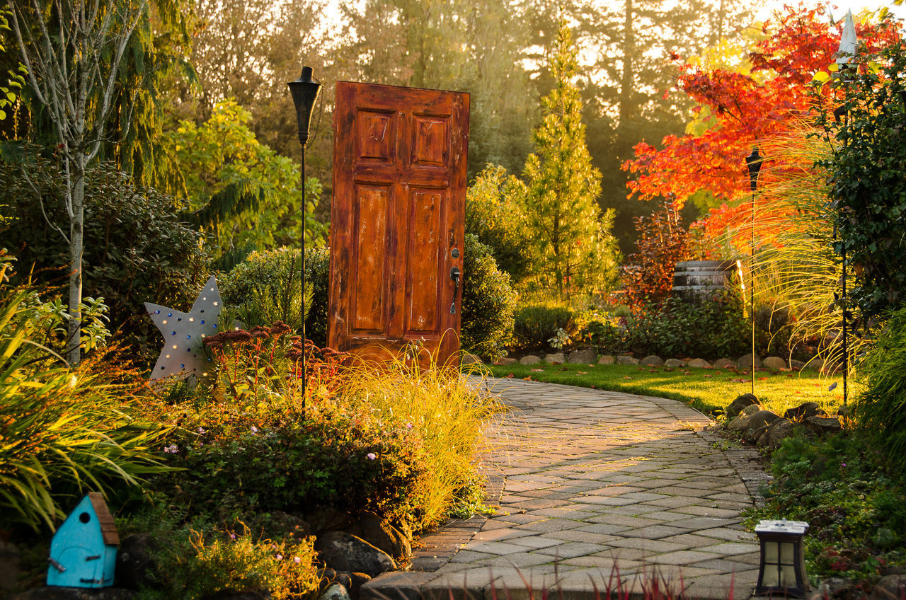 Architecture Autumn Beauty In Nature Building Exterior Built Structure Day Door Garden Growth Leaf My Garden My Garden @my Home Nature No People Outdoors Plant Tree Yellow