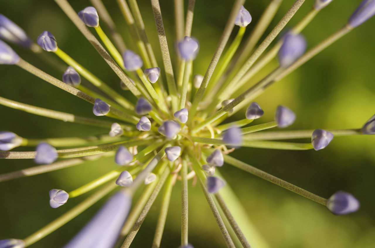 growth, close-up, nature, green color, beauty in nature, no people, fragility, flower, day, outdoors, freshness