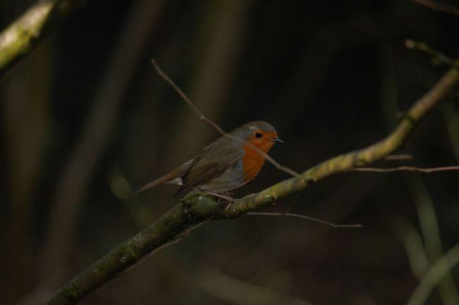 My little followers yesterday ♡ EyeEm Birds EyeEm Nature Lover EyeEm Best Shots A Bit Shadey