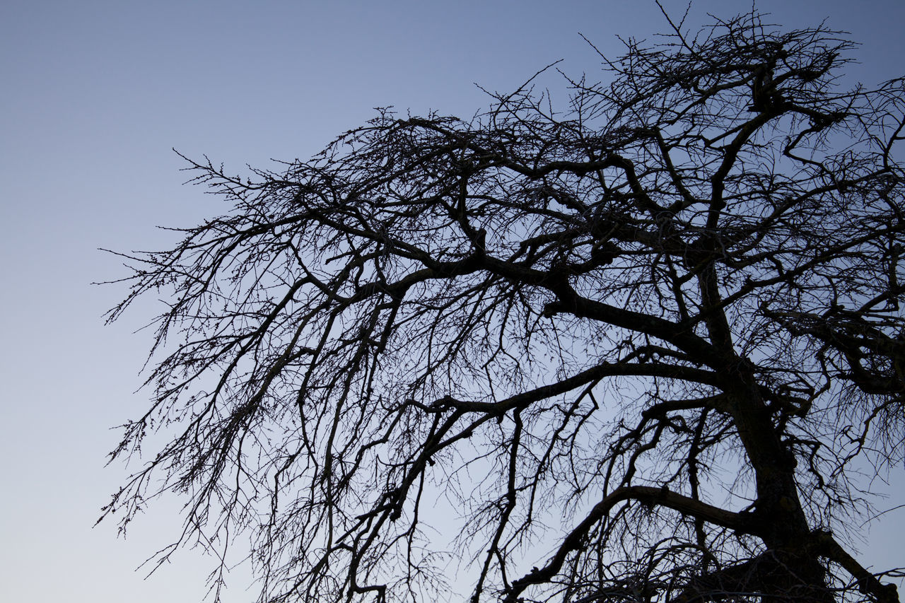 low angle view, clear sky, tree, nature, branch, beauty in nature, no people, outdoors, sky, tranquility, bare tree, day, growth