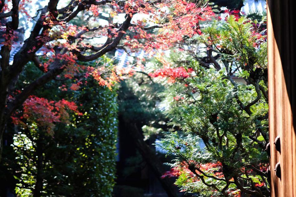 From My Point Of View Japanese Garden Flowers,Plants & Garden EyeEm Nature Lover Door Nature On Your Doorstep Doorart Doors Lover Old Door