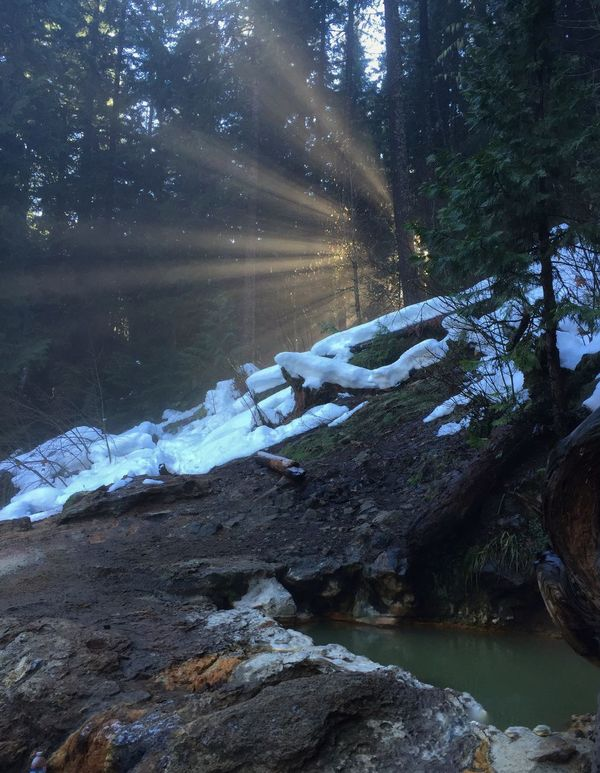 Crazy cool rays filtering through the trees. Oregon IPhone Mobilephotography IPhoneography Iphoneonly Mobile Photography Photo365 Landscape Landscape_Collection Landscapeasusual