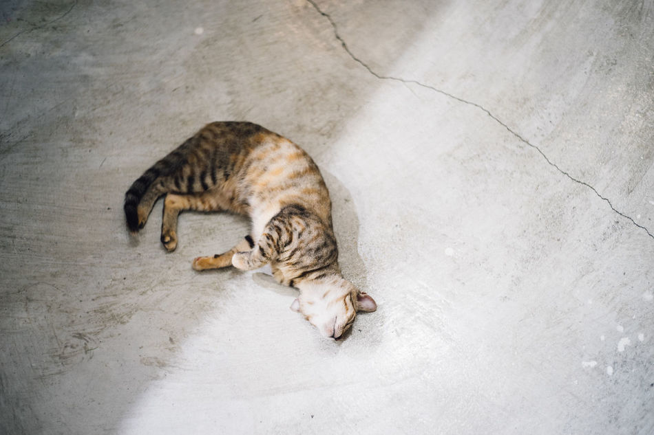 Animal Themes Day Domestic Animals Domestic Cat Feline Full Length Indoors  Leisure Light And Shadow Lights Lying Down Mammal No People One Animal Pets Shadows & Lights Tabby Cat