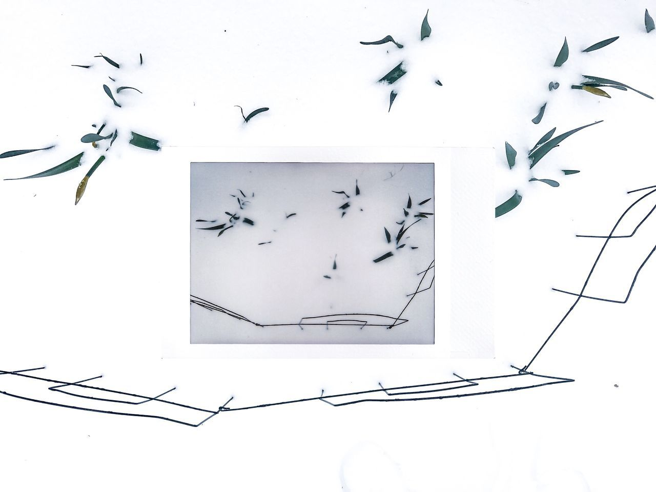 Bird Day Instant Photo A Day Minimalism Nature No People Weather