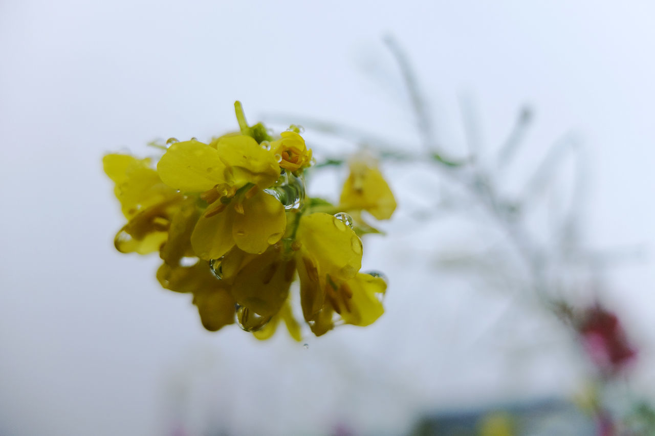 Beauty In Nature Close-up Day Flower Flower Head Fragility Freshness Leaf Nature No People Plant Yellow
