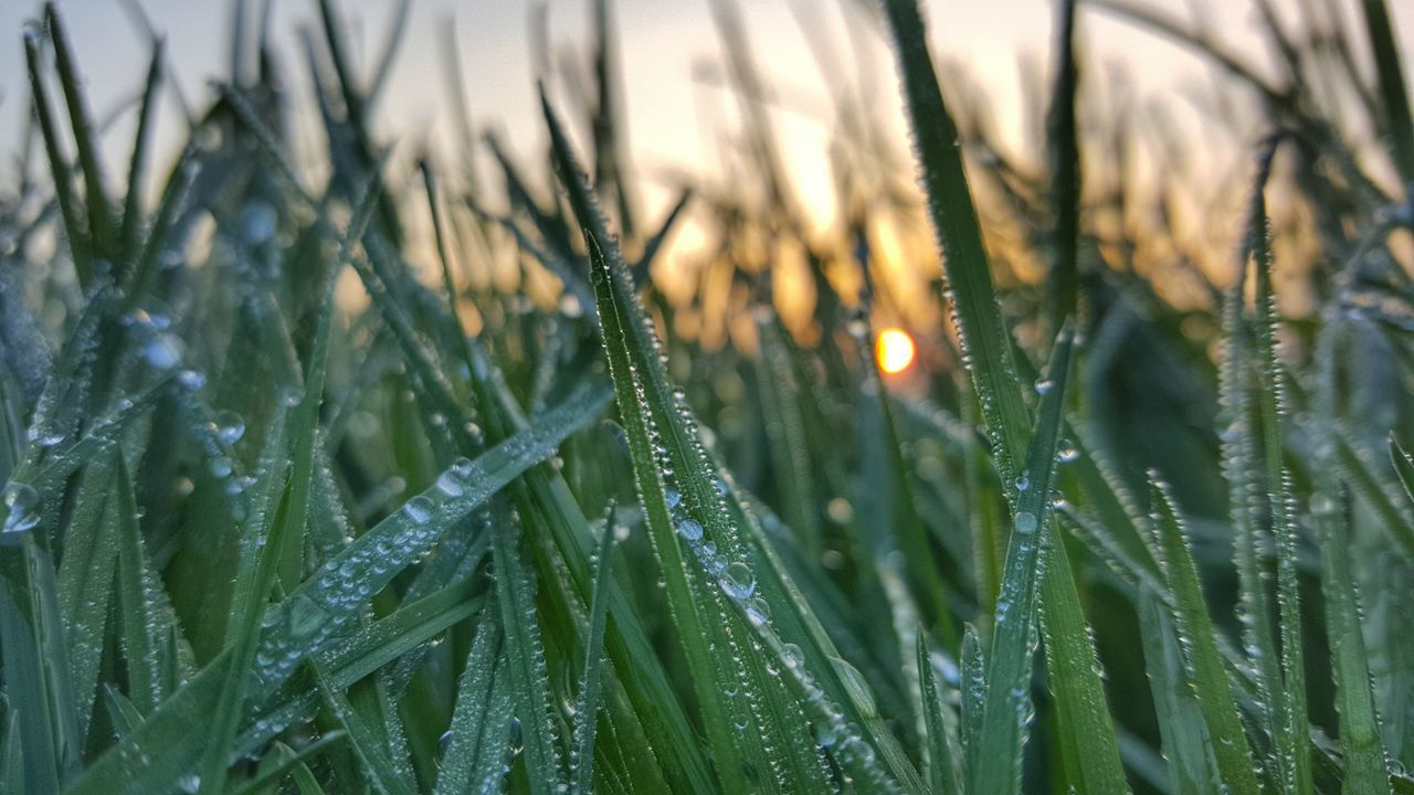 drop, nature, growth, grass, wet, field, weather, plant, beauty in nature, no people, freshness, close-up, water, outdoors, fragility, day