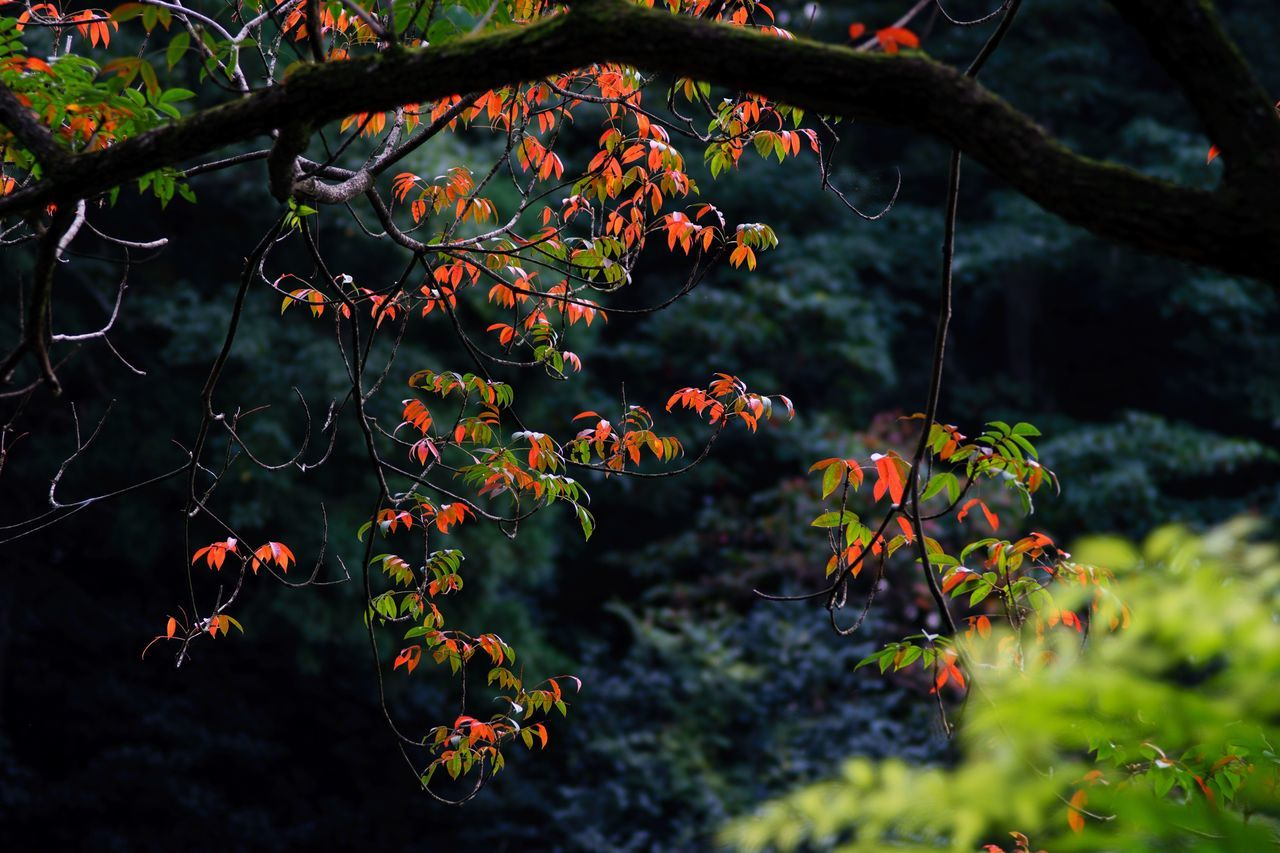 nature, growth, beauty in nature, tree, no people, outdoors, plant, day, branch, leaf, freshness, close-up, animal themes