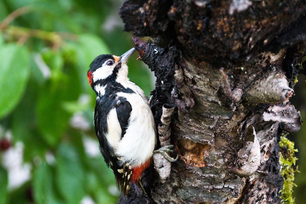 Bird Birds Birds Of EyeEm  Birds_collection Birdwatching Nature Nature_collection Wild Woodpecker Woodpecker In Tree