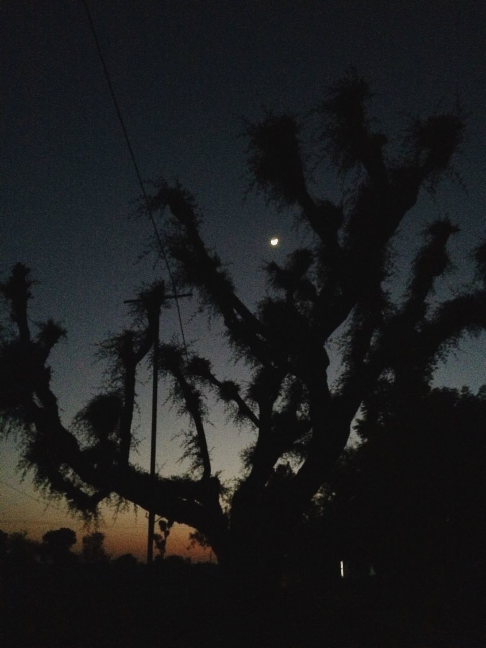 silhouette, low angle view, nature, tree, no people, sky, tranquility, night, growth, tranquil scene, moon, beauty in nature, outdoors, scenics, astronomy