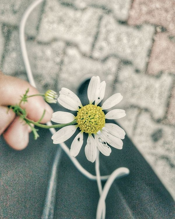 Flower Nature Subhan'Allah ❤❤❤
