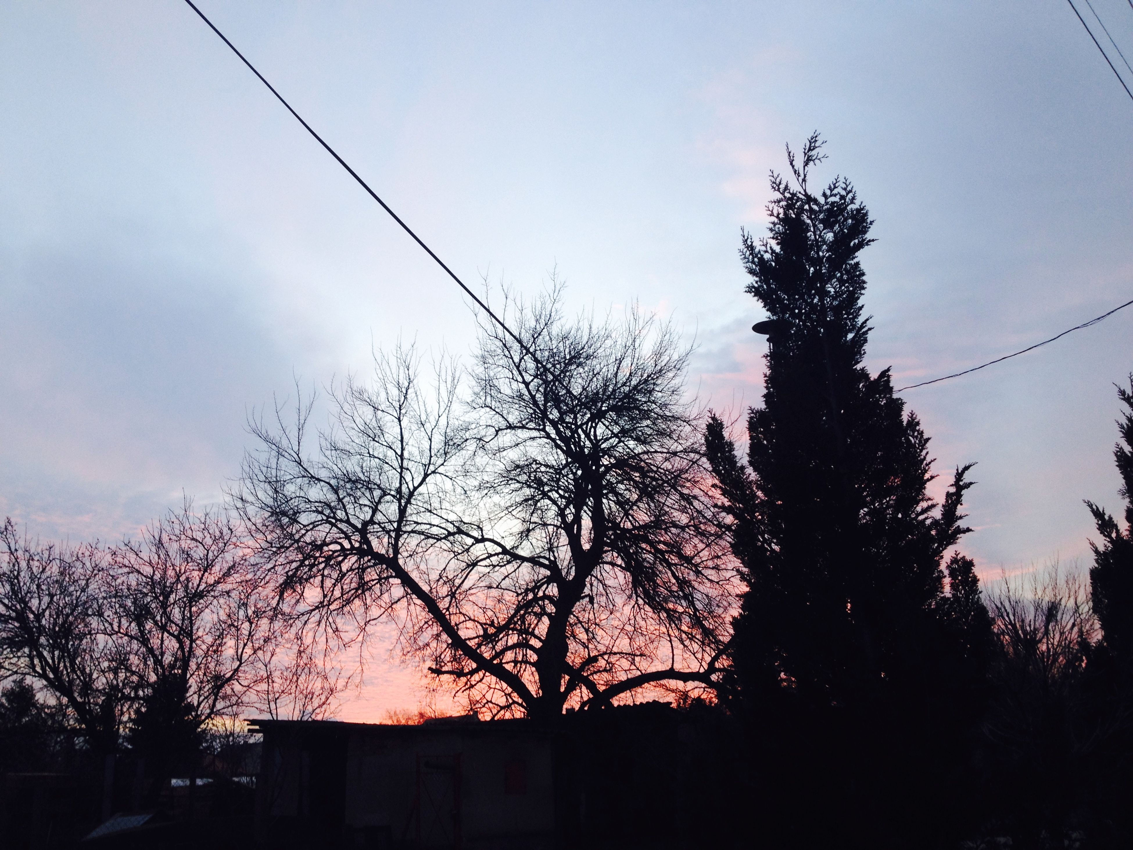 silhouette, tree, low angle view, sky, sunset, power line, building exterior, built structure, branch, nature, dusk, architecture, beauty in nature, high section, outdoors, growth, bare tree, house, no people, cloud - sky