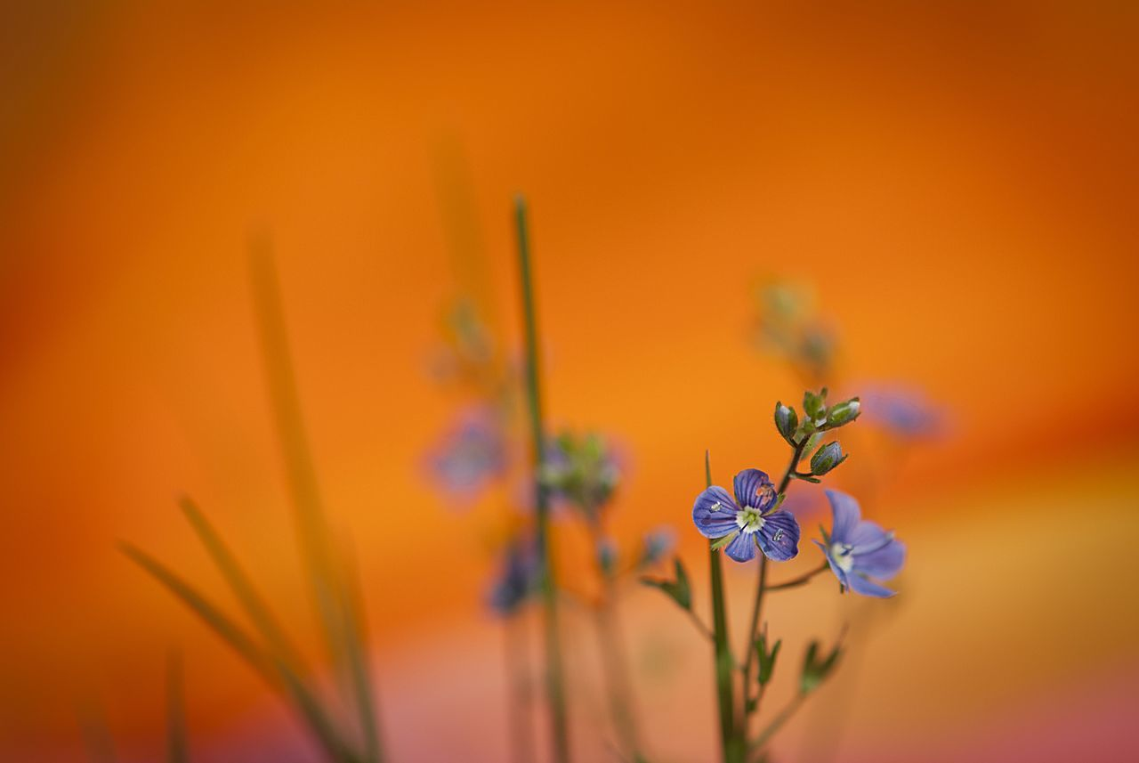 Animal Themes Art Nature Art Work Beauty In Nature Blue Flowers Close-up Concept Contrast Day EyeEm Best Shots Flower Flower Head Fragility Freshness Growth Insect Meadow Nature No People Nostalgia One Animal Orange Background Outdoors Plant Yellow