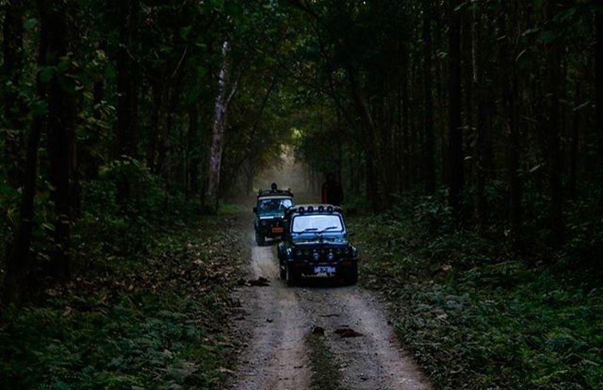 Picturesque Jungle Safari Dramaticlighting Earlymorning  Canon