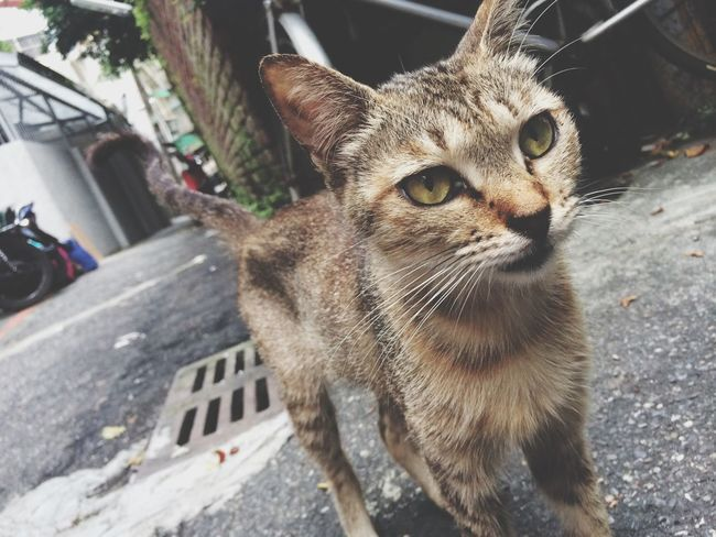 不怕人的小野貓 Cat New Neighbors Taking Photos